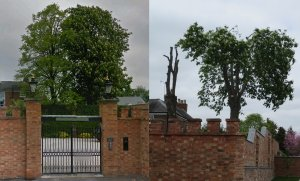 Tree Surgeon fined for contravening Tree Preservation Order