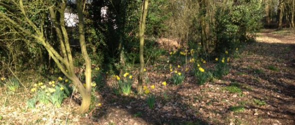 Spring in the Spinney on Kings Walk